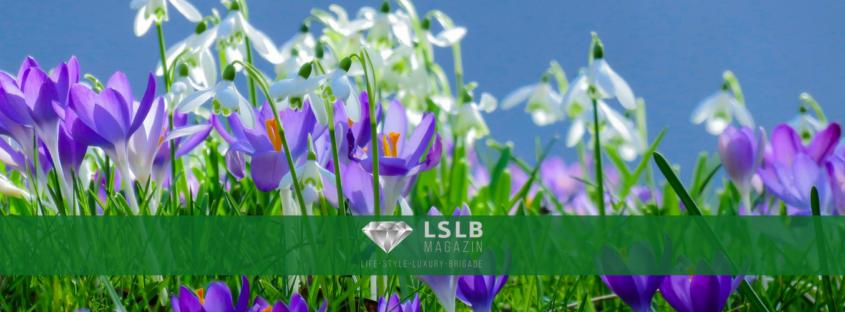 Frühlingsanfang beim LSLB-Magazin
